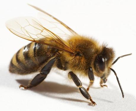 Какой бывает мёд