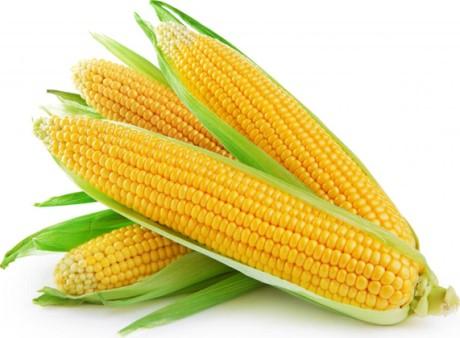 Кукуруза - польза и вред, как выбрать, как хранить